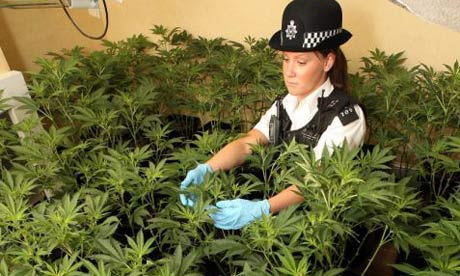 cannabis police