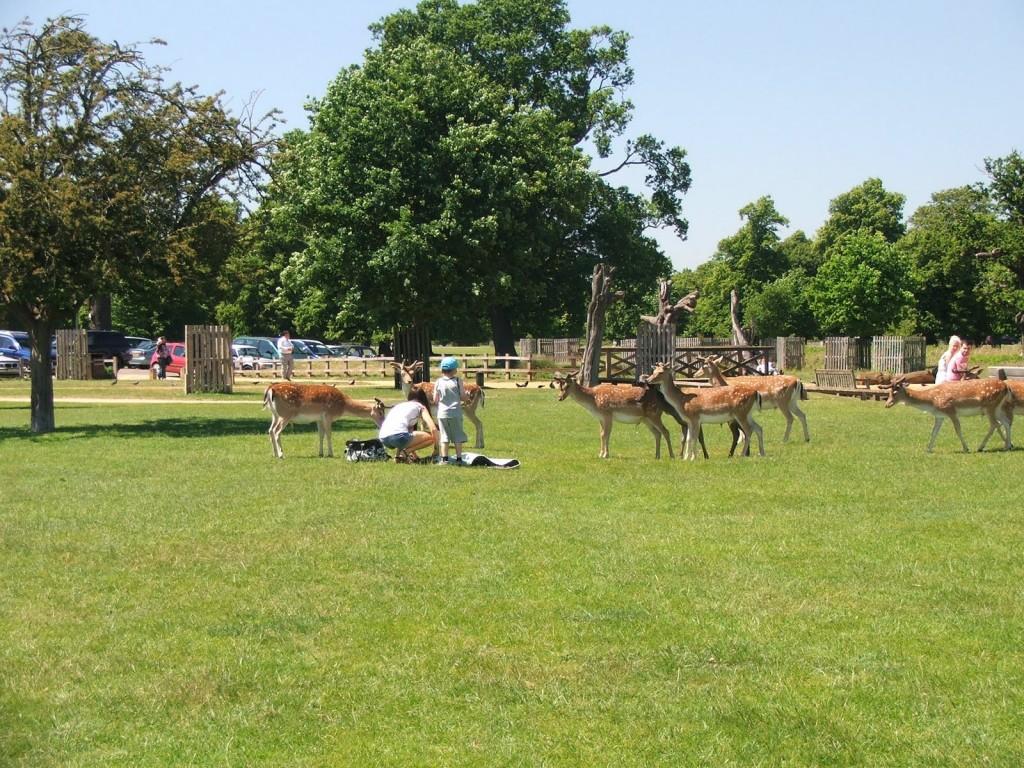 londn parks