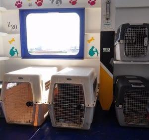 Viajar con tu mascota con British Airways