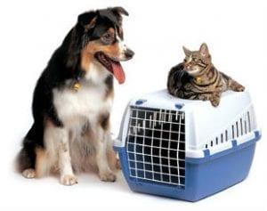 Viajar con tu mascota desde Francia por el eurotúnel
