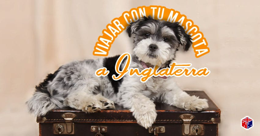 viajar con perro a inglaterra reino unido