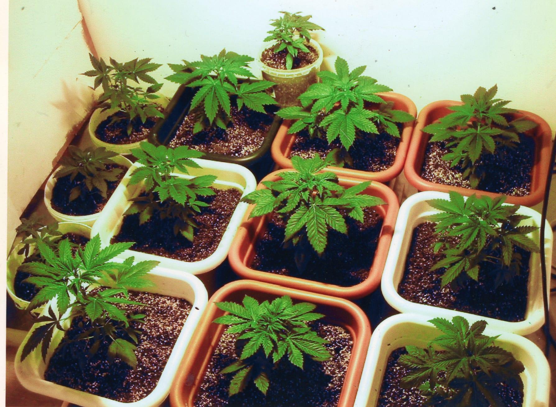 Drogas y Marihuana en el Reino Unido: Precio por comprar y la venta de cannabis