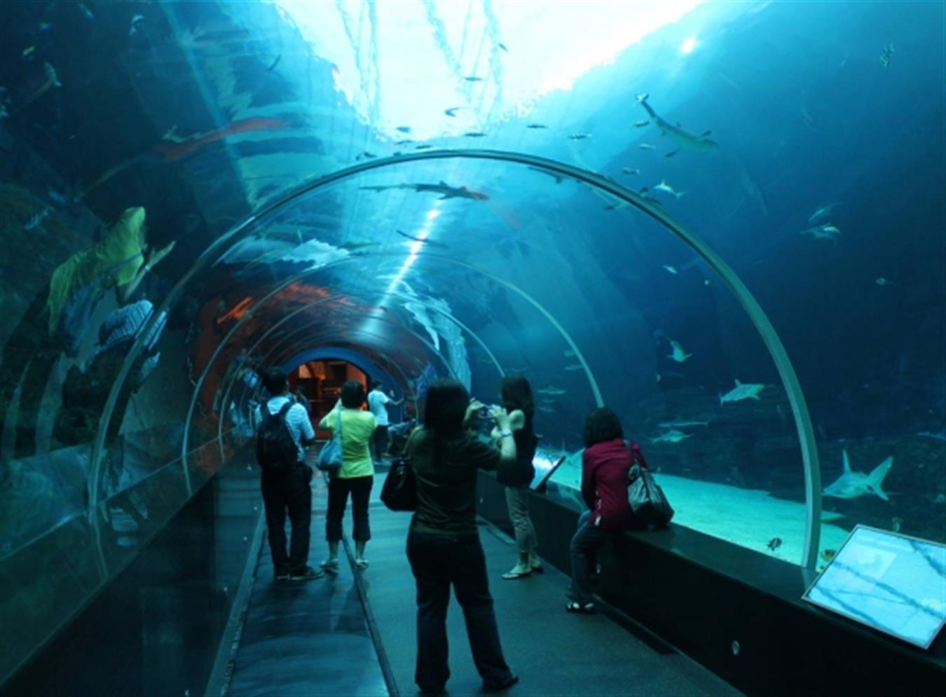 tunel interior del sea life de southbank