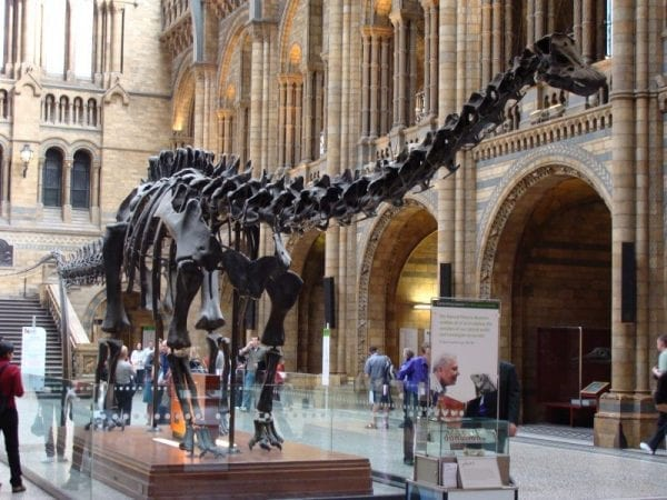 Dinosaurio museo de historia natural de Londres