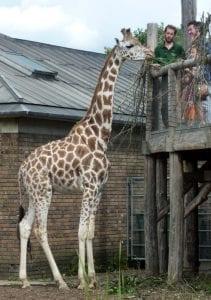 Horario del Zoo de Londres en Regent's Park