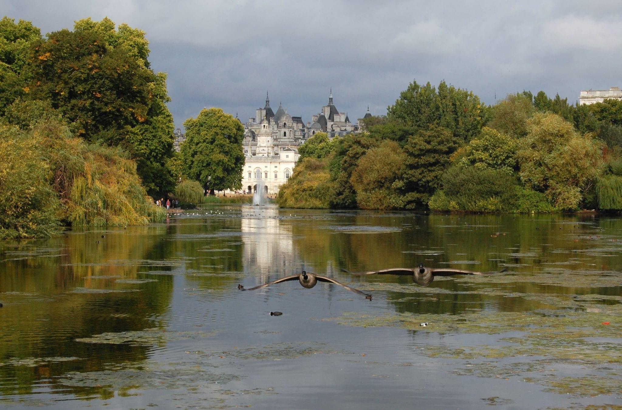 Zorros en St. James'e Park y palacio