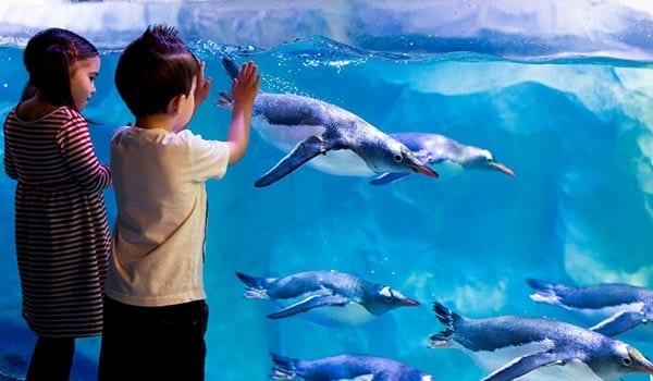 zoo maritimo Sea life de Londres