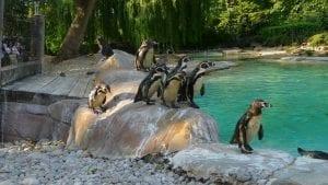 Precios del Zoo de Londres (ZSL)