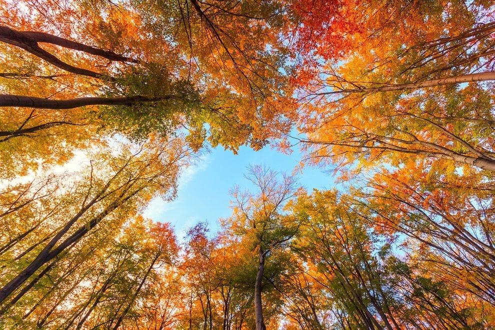 preposiciones de tiempo otoño