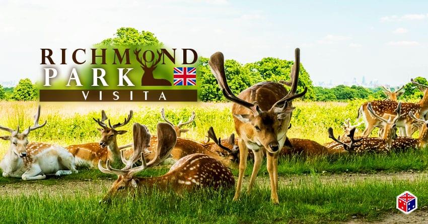 ver ciervos en el parque richmond londres