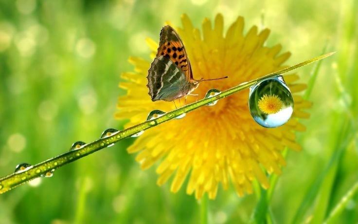 mariposa en naturaleza y su vocabulario en ingles