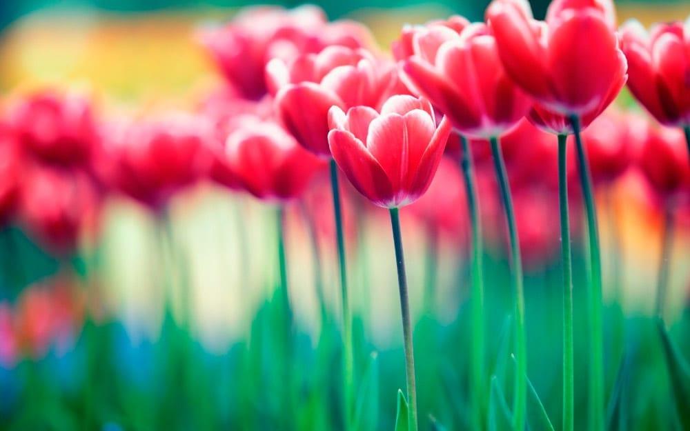 vocabulario plantas, flores arboles inglés