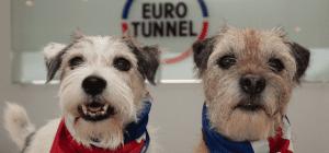viajar a través del Eurotunnel con tu mascota u otro animal