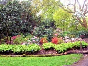 Jardín Botánico en Kew Gardens