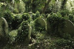 Parques y zonas verdes de Highgate
