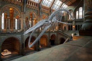 Museo de Ciencias de Londres: De los Mejores del Mundo